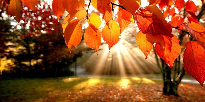 UC-fall-fair-sun-stream-660-330