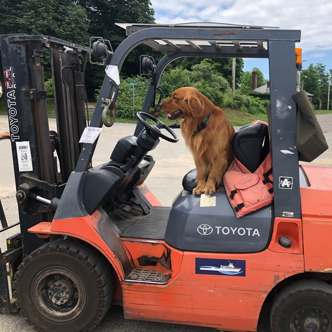 7/15/20: Bodie helping with the incoming freight by Susie Parsons